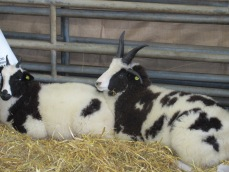 cute woolfest